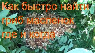 Поход в лес за грибами маслятами 15 июля 2017 Сибирь тайга тихая охота природа сбор грибов грибы гри