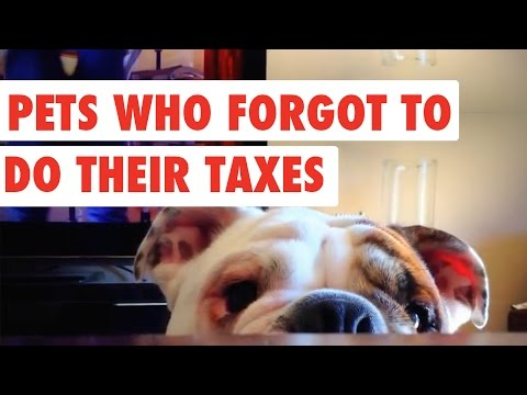 Pets Who Forgot to do Their Taxes | Funny Pet Video Compilation 2017