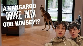 WILD KANGROO BROKE INTO OUR HOUSE!
