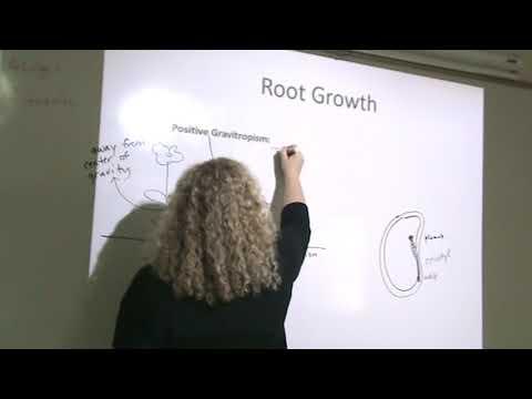 Root Gravitropism