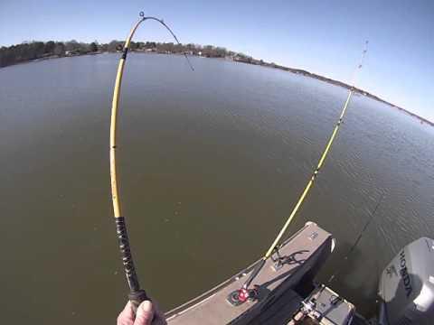 Video Catfishing lake norman