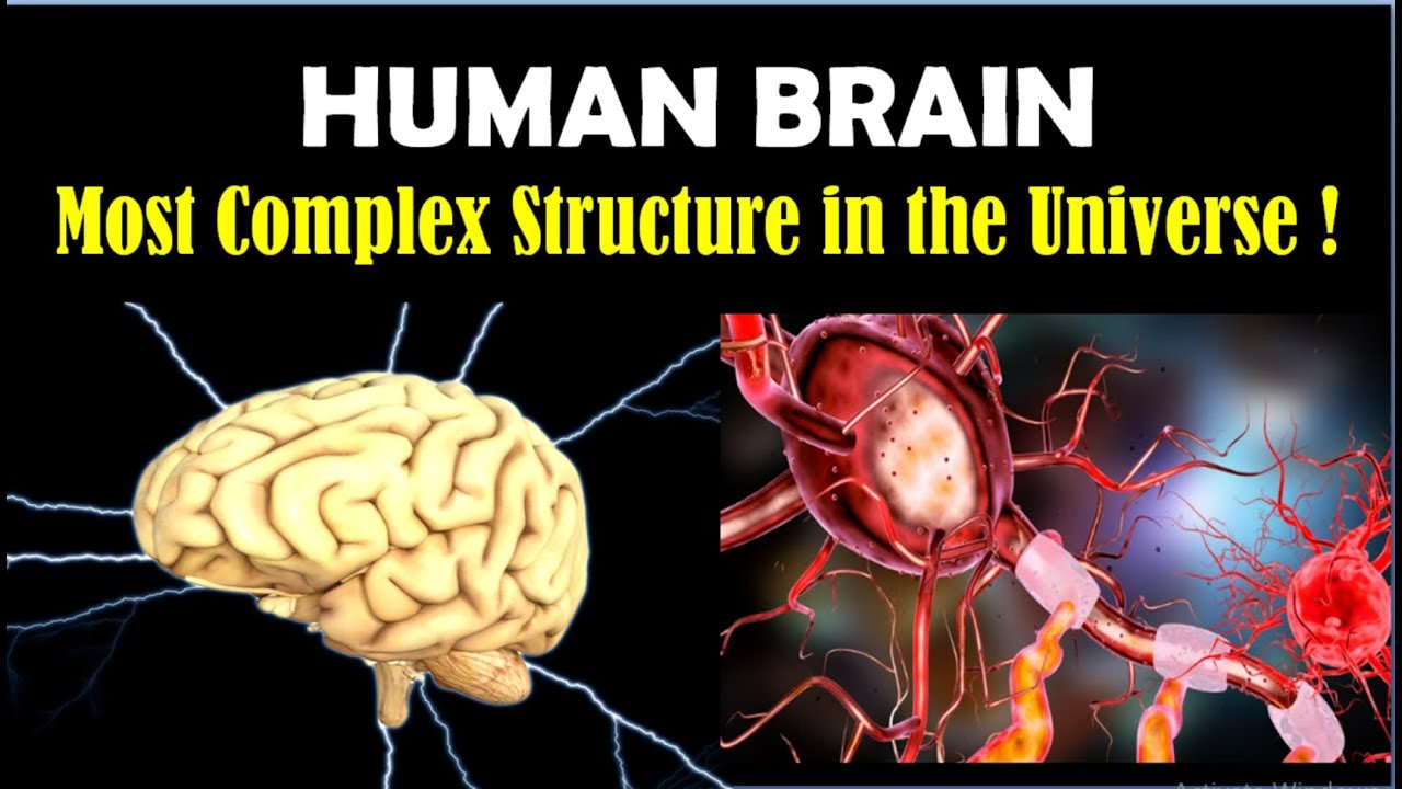 Human Brain Facts - Brain Facts - Power of Human Brain and ...