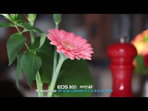 Canon EOS 80D- Dual Pixel CMOS AF