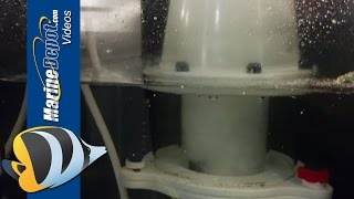 CAD Lights PLS-150 Protein Skimmer Review by Nik - Marine Depot Product Test Team