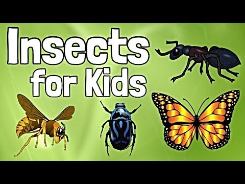 insects-for-kids