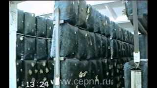 Промышленное производство вешенки(, 2013-01-11T09:03:37.000Z)