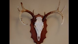 European Mount DIY