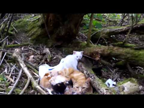 Abandoned cats and kittens