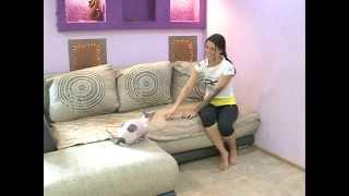 Домашние новости: стрижки у собак и тату у кошек