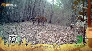 《秘境之眼》 豹 20201221| CCTV - YouTube