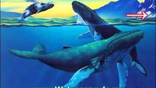 Wal Musik - Wal Lied - Entspannungsmusik Unterwasser mit Waltönen / Wal Geräuschen