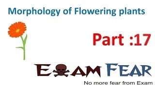 Biology Morphology of Flowering Plants part 17 (Phyllotaxy :Alternate, opposite) CBSE class 11