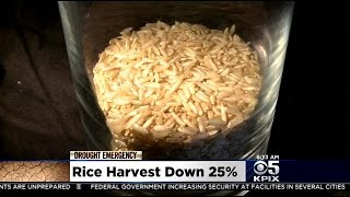 Drought Sucking California's Sushi Rice Harvest Dry