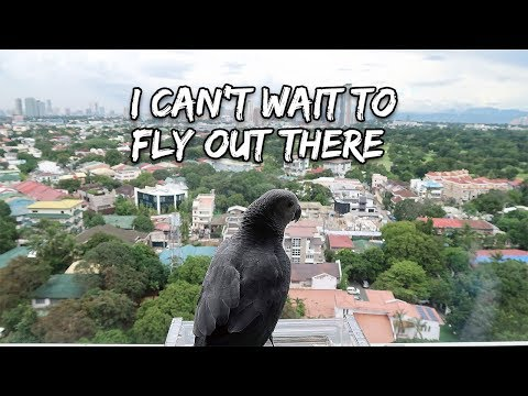 Training My Bird For Outdoor Free Flight | Vlog #273