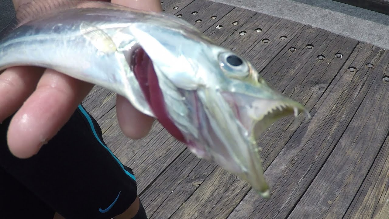 Catching Ribbonfish Off The Pier