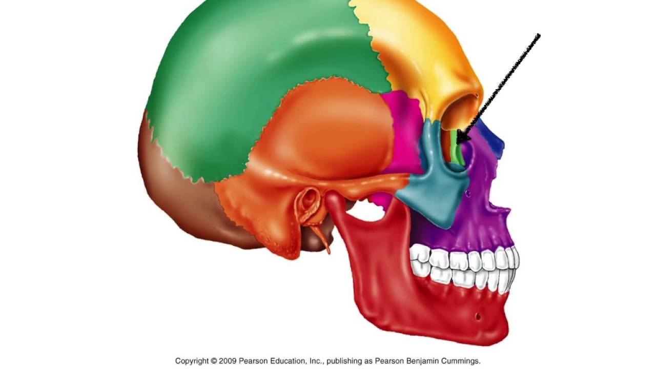 Skull flash card video for study - YouTube