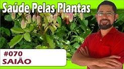 hqdefault - Cura De Diabetes Pelas Plantas