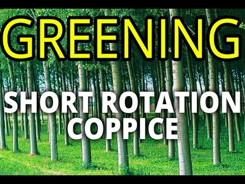 Short Rotation Coppice (SRC). Poplar plantation - the best way for greening (willow alternative)