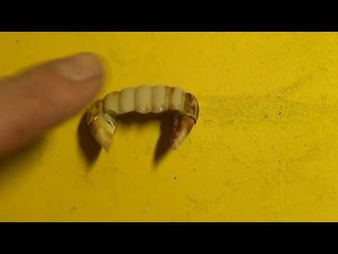 Как сделать золотые зубы