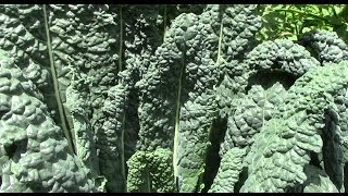 Do Greens Grown in Rock Dust Taste Better?