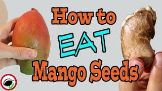 You can eat MANGO SEEDS - Weird Fruit Explorer Ep. 357