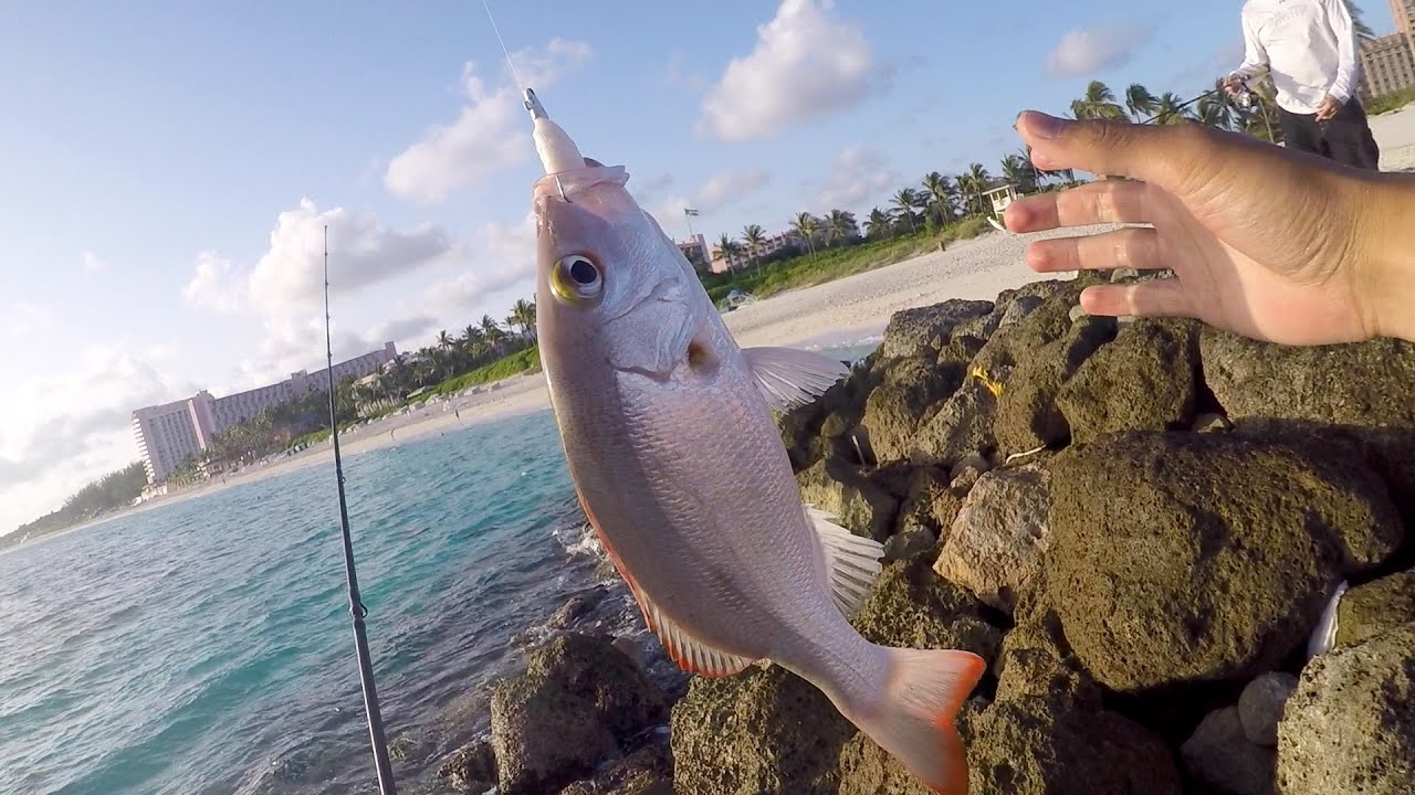 Saltwater fishing gets me hyped beach fishing in the for Fishing nassau bahamas