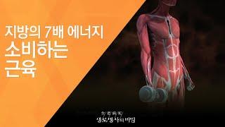지방의 7배 에너지 소비하는 근육 - (2011.9.2…
