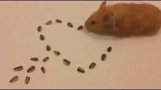 chuột xếp hình trái tim rất đẹp