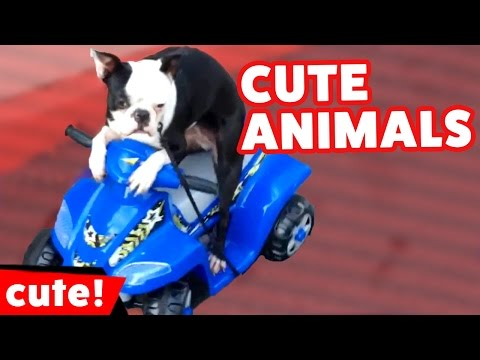 Funniest Pet Reactions & Moments Caught On Tape Compilation | Kyoot Animals