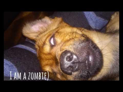 Jessie Dog. Funny dog