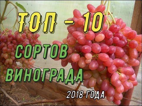 ТОП 10 сортов винограда. Виноградник Вадима Точилина