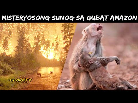 Misteryo ng Sunog sa Gubat ng Amazon