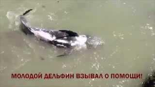 Дельфин Совершил Суицид, Билет в Дельфинарий Оплачивает Смерть Дельфинов!