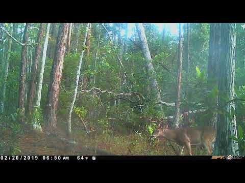2019 Tiger Bay Camera Pull Before The Storm