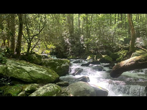 Fly Fishing In The Great Smoky Mountains National Park 2020