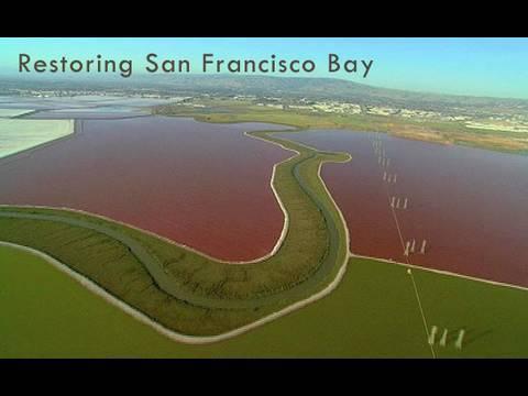Saving the Bay - Restoring San Francisco Bay: Hamilton Field