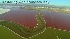 Saving the Bay - Restoring San Francisco Bay: Hamilton Field