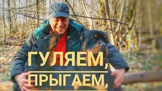ДВА РОТВЕЙЛЕРА ПРЫГАЮТ,ДЕРУТСЯ И ХОДЯТ ПО БРЕВНАМ.Воспитание и дрессировка собаки