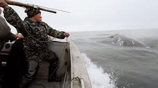 Полювання на китів.Чукотка.