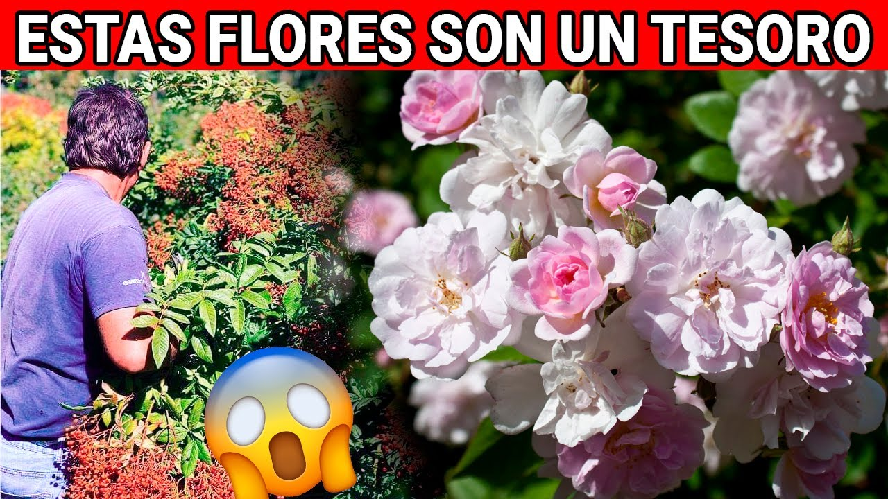 Estas 7 Flores son un Tesoro para tu Salud pero pocos las conocen