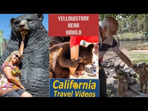 Yellowstone Bear World, Oh My!  Not Lions nor Tigers but BEARS +++