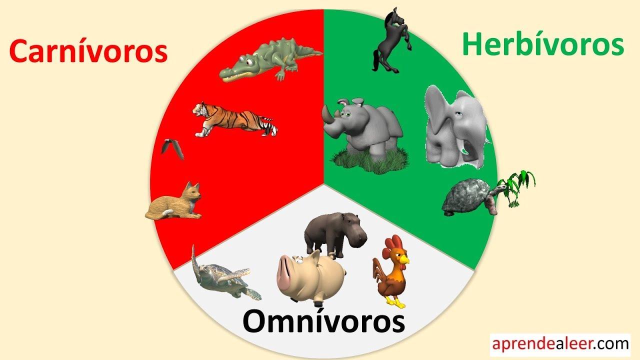 Imagenes De Animales Carnivoros Para Colorear: Animales Carnivoros Herbivoros Y Omnivoros Para Niños