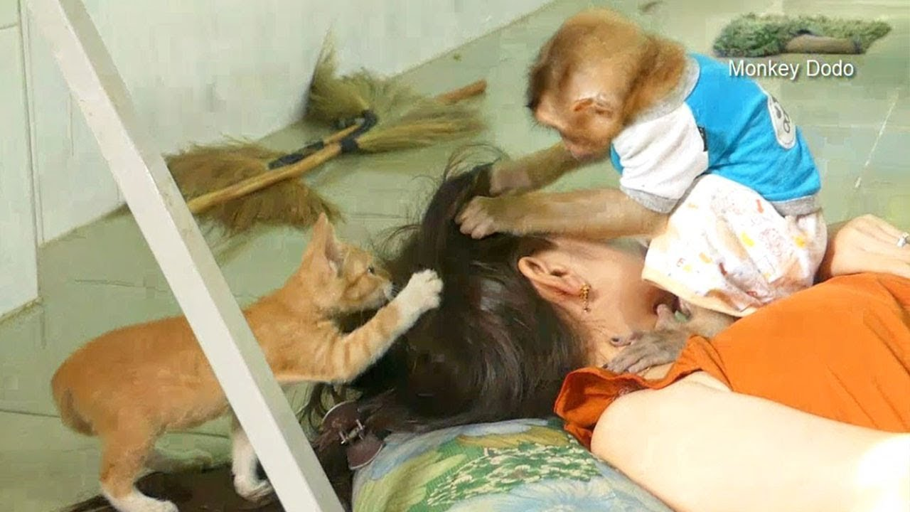 Wow Very Amazing Dodo And Kitten Meow Grooming Mom Until Sleep