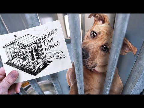 I Built a Tiny House for a Homeless Dog