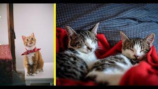 Funny cats video New Cat Compilation # 9 HD | Cat Vines