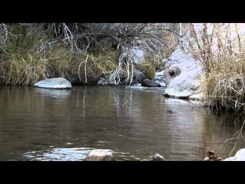 Fly Fishing Utah for Bonneville Cutthroat Trout