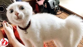 Funnny Pets 😸 Top Funny Cat Videos of The Week 💗 Funny Cat Moments 🐱 Funny Pets Moments 😂 Cats  #16