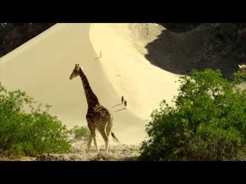 Namibia's Green Desert Summer Season