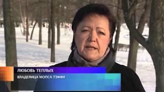 Ветеринарная клиника: Лечим или калечим?(, 2013-03-26T08:02:32.000Z)