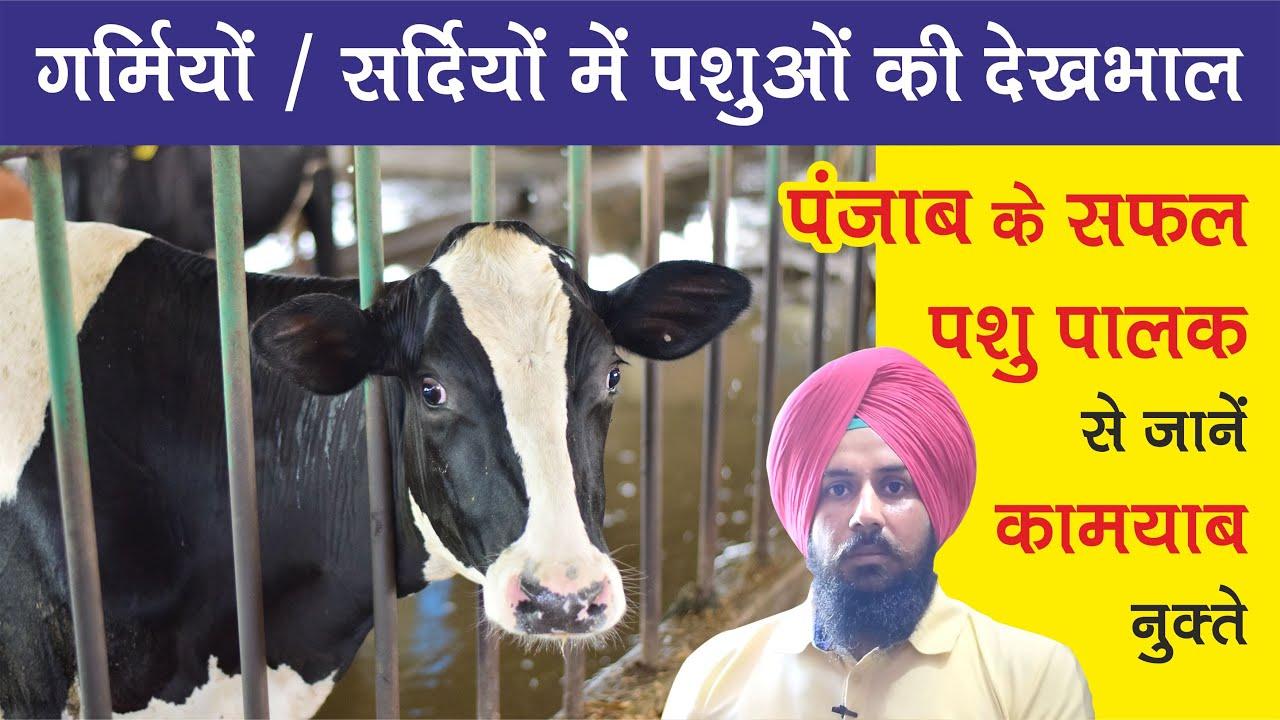 गर्मियों/सर्दिओं में पशुओं की सही देखभाल ? Tips for better health of Dairy ...